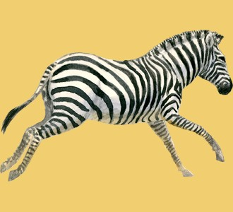 Zebra ##STADE## - coat 9
