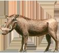 Warthog ##STADE## - coat 17