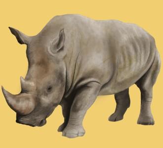 Rhinoceros ##STADE## - coat 52