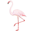 Flamingo ##STADE## - coat 68