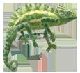 African chameleon ##STADE## - coat 72