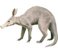 Aardvark ##STADE## - coat 69