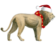 Lion ##STADE## - coat 117