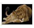 Lion ##STADE## - coat 16020