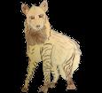 Striped Hyena ##STADE## - coat 1000000034
