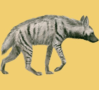 Take in a striped hyena species animal of the savannah