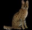 Serval ##STADE## - coat 46